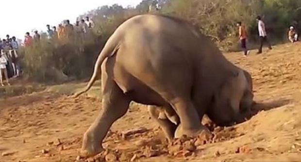Elefantul a săpat timp de 11 ore în pământ. Când și-au dat seama ce făcea animalul acolo, au pus repede mâna pe telefon și au filmat tot! Uite ce a scos de sub pământ