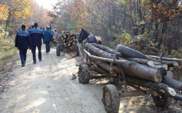Hoţ de lemne împuşcat mortal de poliţişti, la marginea unei păduri în județul Mureș