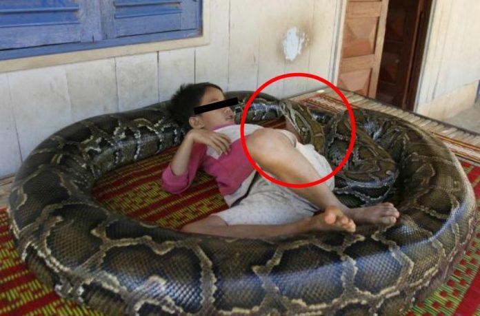Copilul lor avea 3 luni când au găsit un piton de 30 de cm. sub pătuț. L-au luat și l-au dat afară, dar îl găseau mereu lângă copil. Peste 11 ani șarpele a ajuns la 113 kilograme și 5 metri. Ce face copilul cu el nu credea nimeni că e posibil