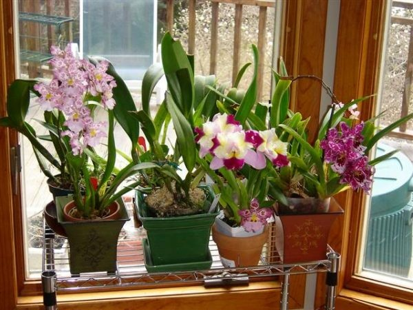 Un truc fenomenal pentru ca orhideea ta să crească cât mai frumos și să înflorească într-un timp cât mai scurt!