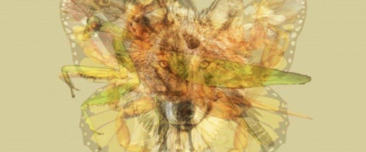 Primul ANIMAL pe care îl vezi în imagine va dezvălui adevărul despre PERSONALITATEA și VIAȚA ta