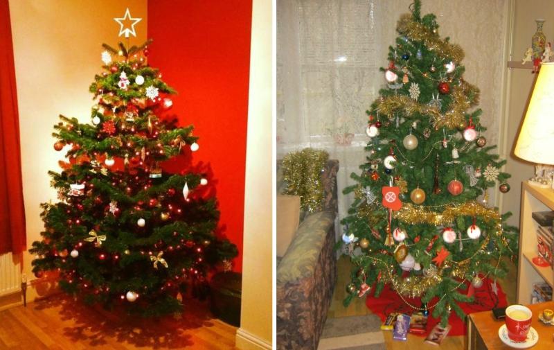 Tu știai ce pericole se ascund în bradul de Crăciun? Nu o să-l mai ții niciodată în casă, după ce vei afla asta!