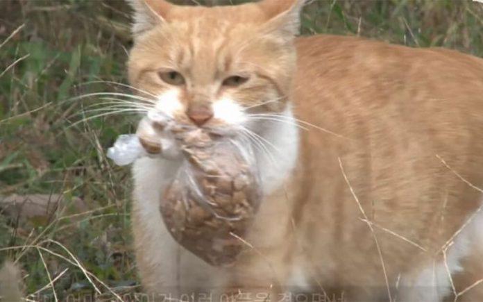 Femeia a observat că pisica de care avea grijă nu mai mânca și ținea mereu în gură punga asta, apoi fugea ca să n-o vadă nimeni! A decis s-o urmeze, să vadă ce face, dar când a văzut asta, nu i-a venit să creadă! Ce a descoperit femeia