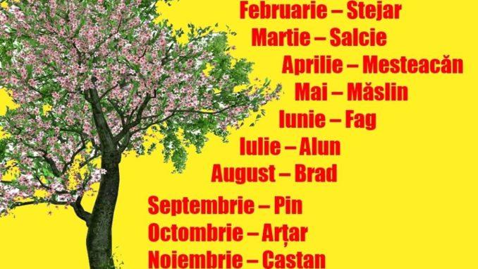 Alege copacul care corespunde lunii în care te-ai născut. Vezi ce spune el despre destinul tău