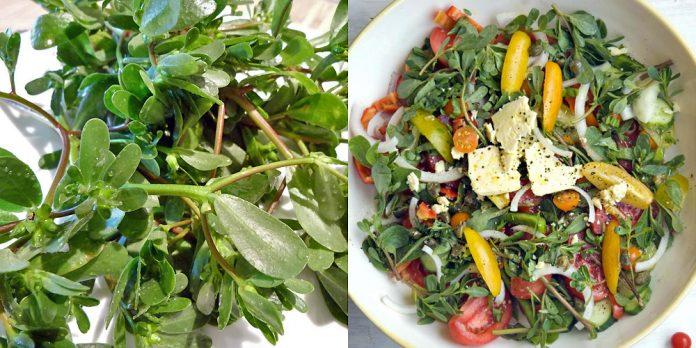Buruiana-minune pe care noi o aruncăm e folosită de străini în salate și medicamente. Iată 5 proprietăți miraculoase