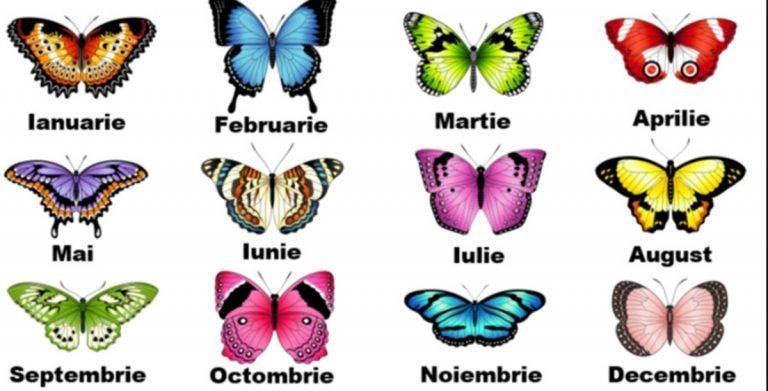 Alege fluturele ce corespunde lunii în care te-ai născut. Vezi ce spune el despre personalitatea ta