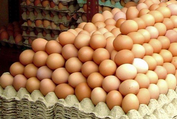Cum recunosti ouale care provin de la gaini bolnave?