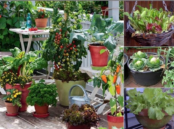 Sugestii pentru amenajarea unei grădini de legume în balcon