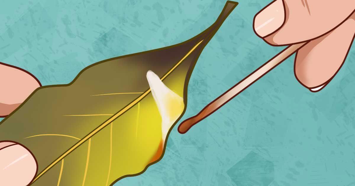 Iată care sunt beneficiile arderii unei frunze de dafin în casa ta. Nici nu ştiai că sunt atât de eficiente.