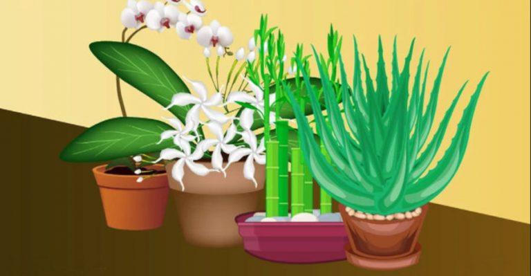 10 plante care atrag energiile pozitive, bogatia si belsugul in casa ta: