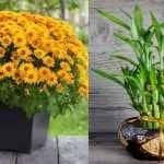 10 plante care atrag energiile pozitive, bogăția și belșugul în casa ta.